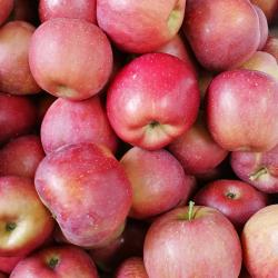 昭通野生苹果