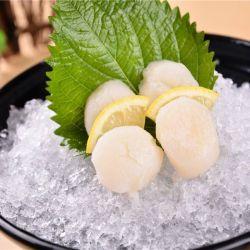 刺身带子刺身带子新鲜冷冻大颗瑶柱鲜贝澳带料理食材扇贝肉
