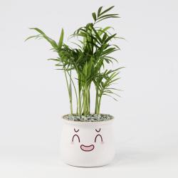 品植表情包袖珍椰子室内盆栽植物四季长青